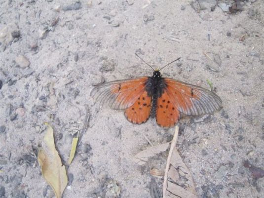 In a sheltered part of the trail we came across butterflies fluttering around all over! Such a beautiful sight.