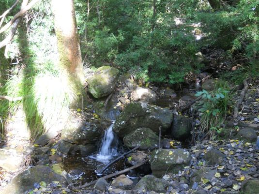 A beautiful mountain stream in the forest, bubbling down through the rocks.