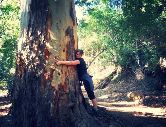 We came across this huge big blue gum trees ~ perfect for a tree hug of course!