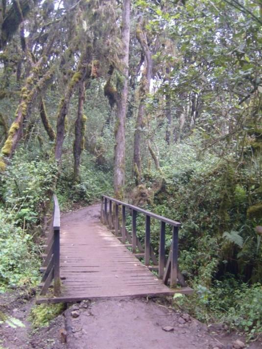 A bridge in the rain forest.