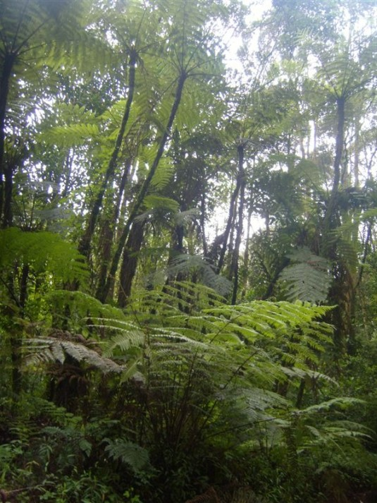 Walking back through the beautiful rain forest was the perfect way to end our journey. Photo by Donna McTaggart