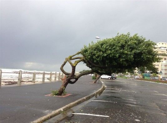 Love these crazy trees along the Promenade.