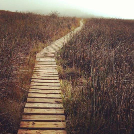 A wooden stairway leading us back through the reeds.