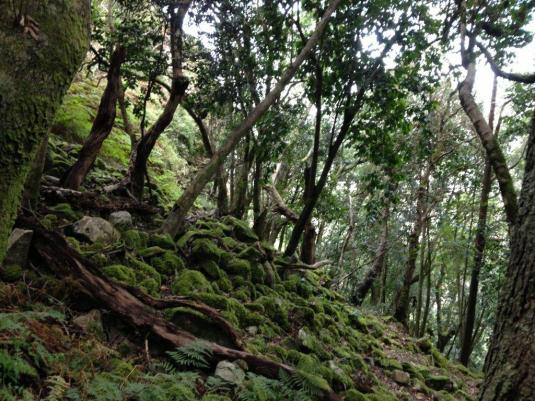 The beautiful forests on the upper part of Skeleton Gorge.