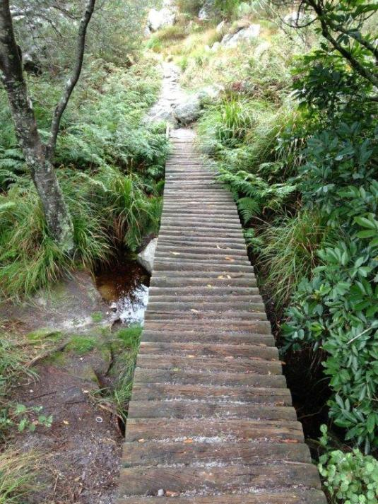 Wooden walkways through the forest near the top.