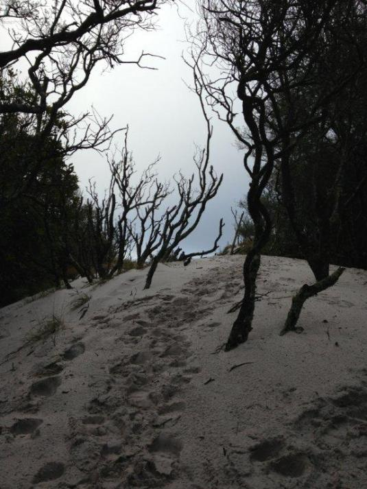 Love the eerieness of the dead trees and beach sand on top of the mountain.