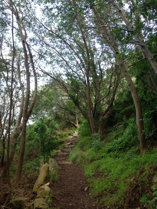 The contour path took us along the gorgeous green mountain slopes, under trees and through mini forests.