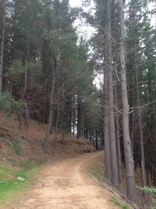 One of the jeep tracks we crossed as we headed up in the pine forest ~ this time not even a mountain biker in sight.