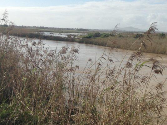The Diep River along side the golf course, swollen and running fast as low tide approached.