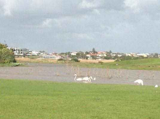 The birds and the flamingo's loving the water even if it did close the Golf Course!