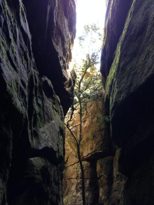 Trees growing between the rocks inside Tranquility Cracks, reach up towards the light.