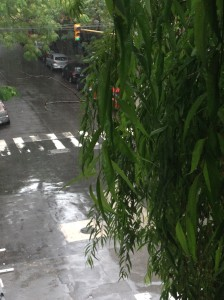 Rainy start to the day in Beunos Aires. The view from my tree-lined hotel room.