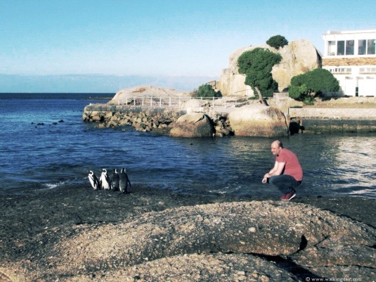 Charlie talking to the penguins on Boulders beach in Simons Town.