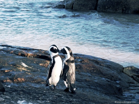 And then he seemed to end it with a kiss. It was the cutest thing ~ awh love is so beautiful evening in the animal world!