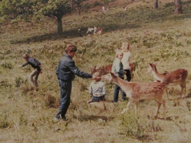 Feeding the bucks at Rhodes Memorial.