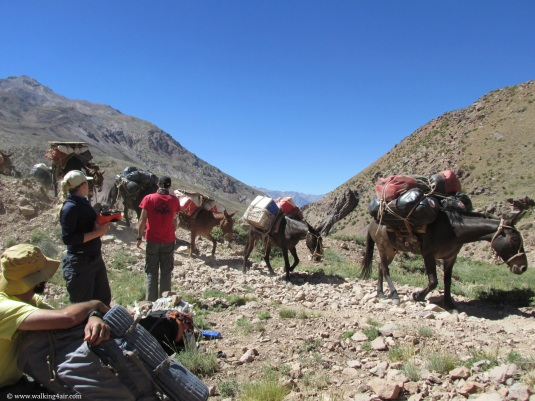 The mules coming past with their loads, kicking up dust as they pass.