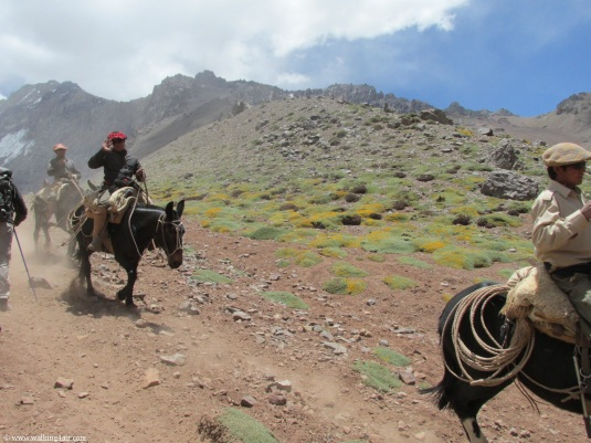 The muleteers making their way to Base Camp.